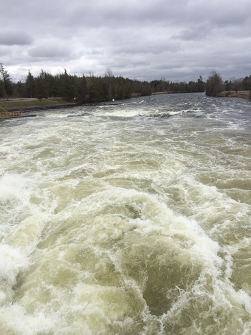 trent river rages Peterborough, Ontario Canada
