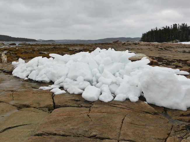 Lingering Ice Birchy Bay, Newfoundland and Labrador Canada