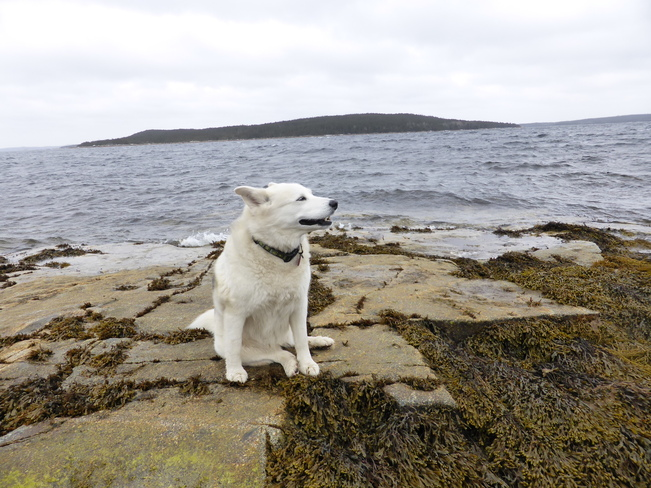 Sitting Pretty! Birchy Bay, Newfoundland and Labrador Canada