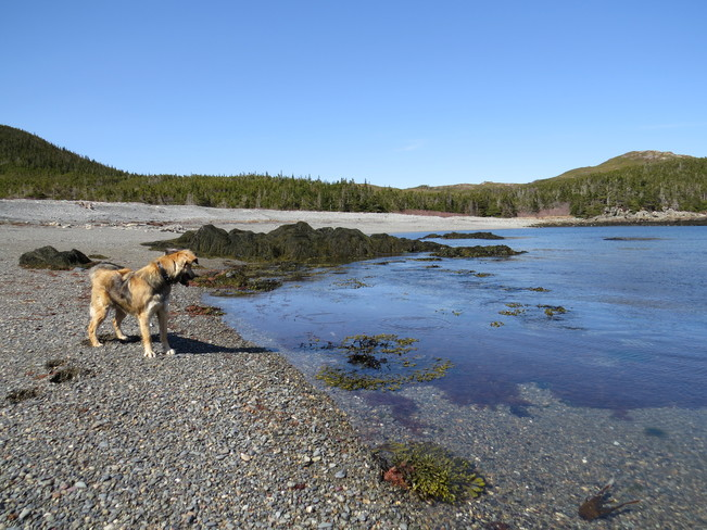 atthe beach with the dog Rock Harbour, Newfoundland and Labrador Canada