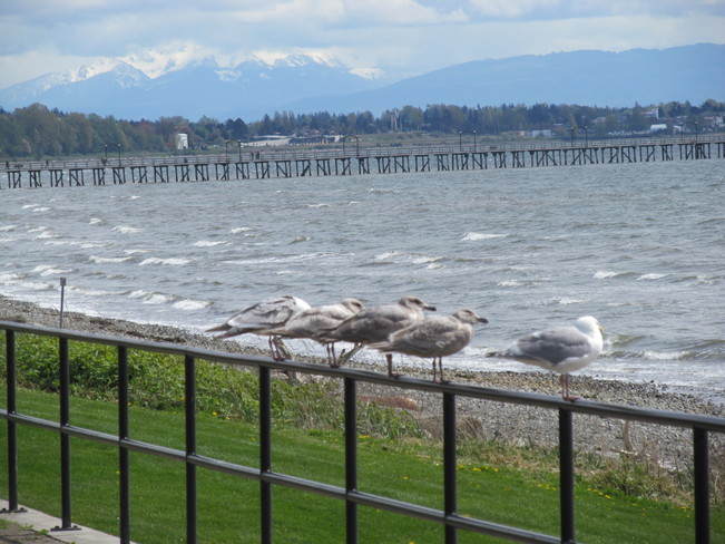 Windy day in Whiterock White Rock, British Columbia Canada