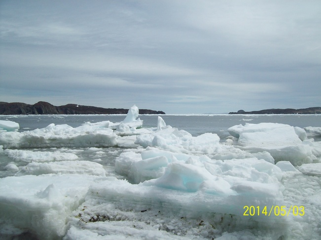 harbour ice Twillingate, Newfoundland and Labrador Canada