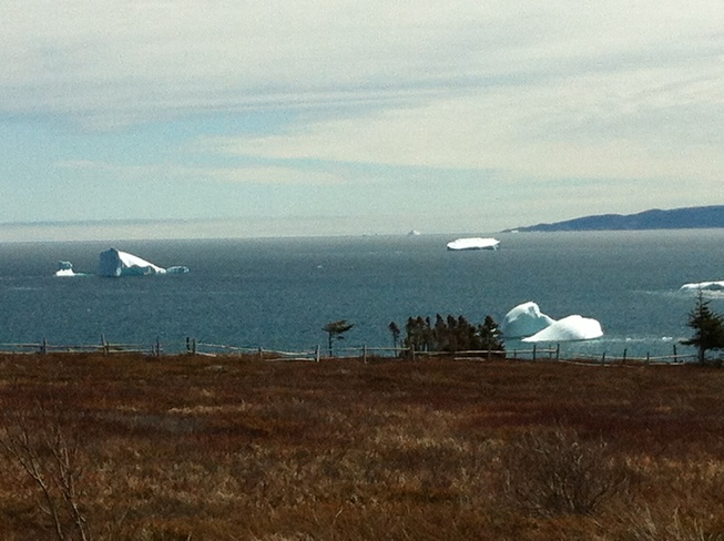 ice berg mother load Western Bay, Newfoundland and Labrador Canada
