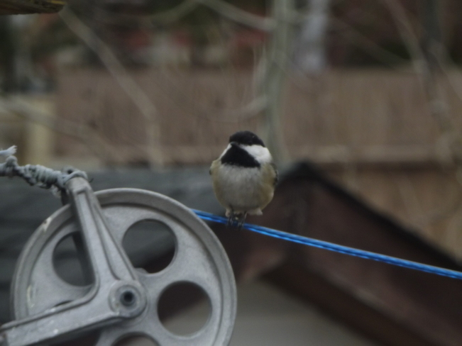 """Waiting in_line - HighTec Bird Chickadee"