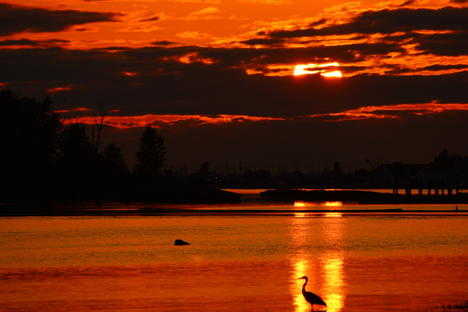 mayo de cinco sunset Richmond, British Columbia Canada