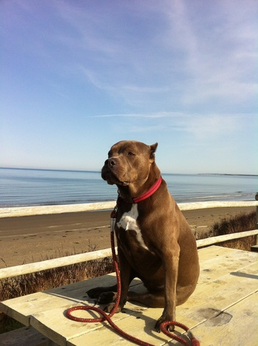Sash taking it all in Mavillette, Nova Scotia Canada