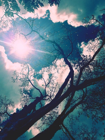 Sun, tree, clouds Vancouver, British Columbia Canada