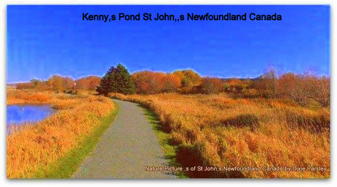 Nature at Kenys pond St. John's, Newfoundland and Labrador Canada