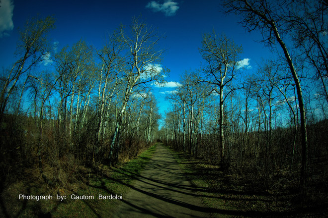 Path in Woods during Spring time Edmonton, Alberta Canada