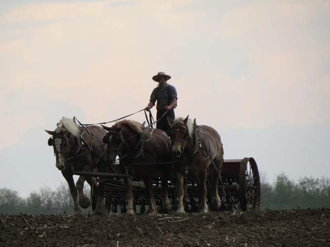 Working up the Fields Norwich, Ontario Canada