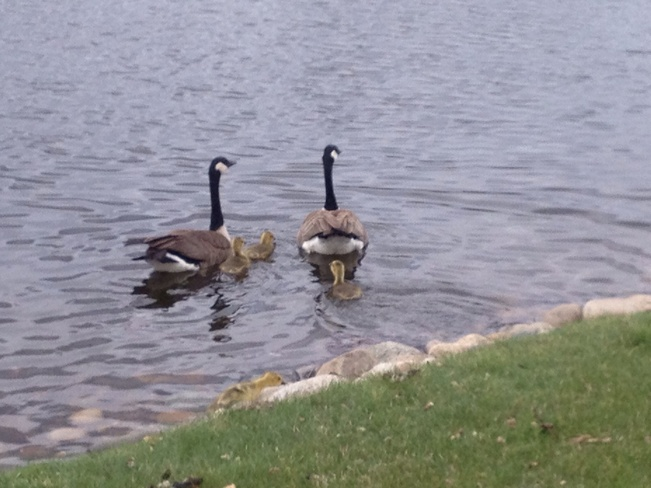 Going for a swim......... Medicine Hat, Alberta Canada