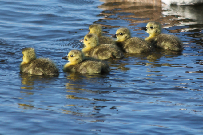 2014 Goslings Kingston, ON