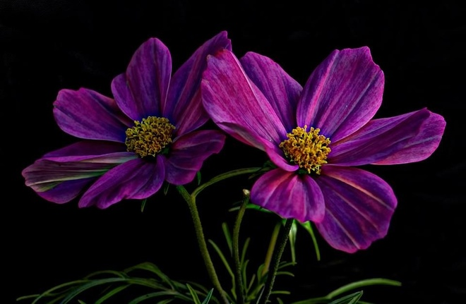 cosmos in love <3 Pierrefonds, Quebec Canada