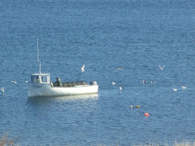 Fishing in the early morning in Rocky Harbour. Rocky Harbour, NL