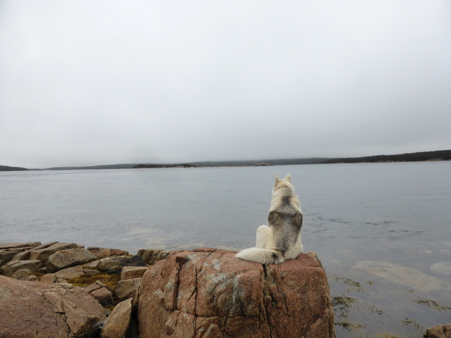 Contemplating Birchy Bay, NL