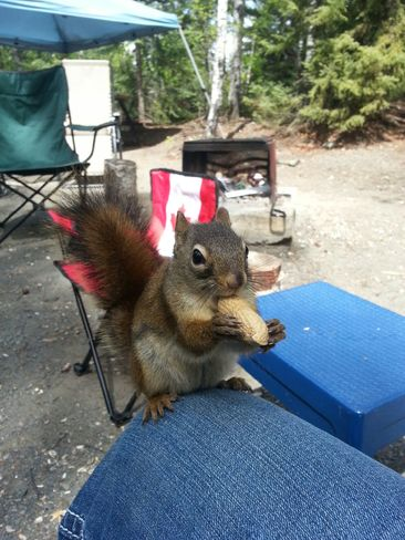 squirrel Flin Flon, MB