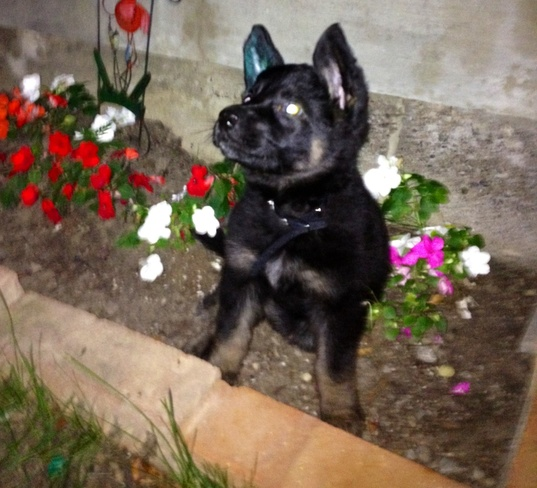 Puppy loves her sun & flowers Buttonville, Ontario Canada