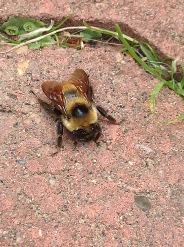 To cold for bumble bee's? Edmonton, AB