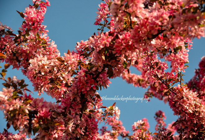 Blossoms Sarnia, ON