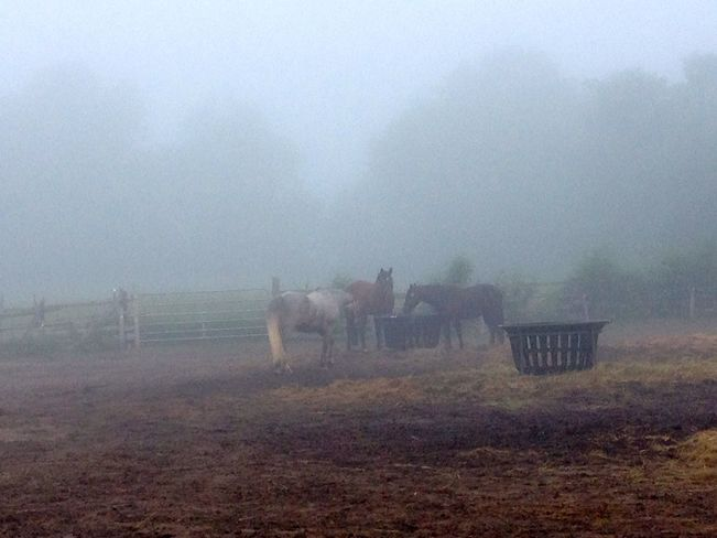 misty morning on our farm Harrowsmith, ON