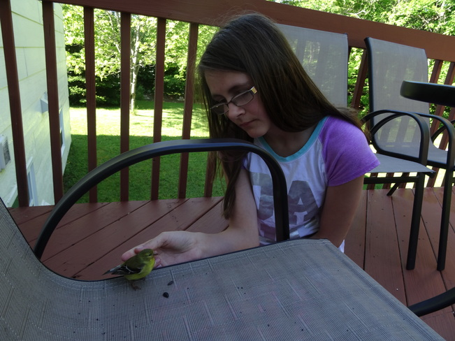 Bird rescue Ryan Drive, Rothesay, NB
