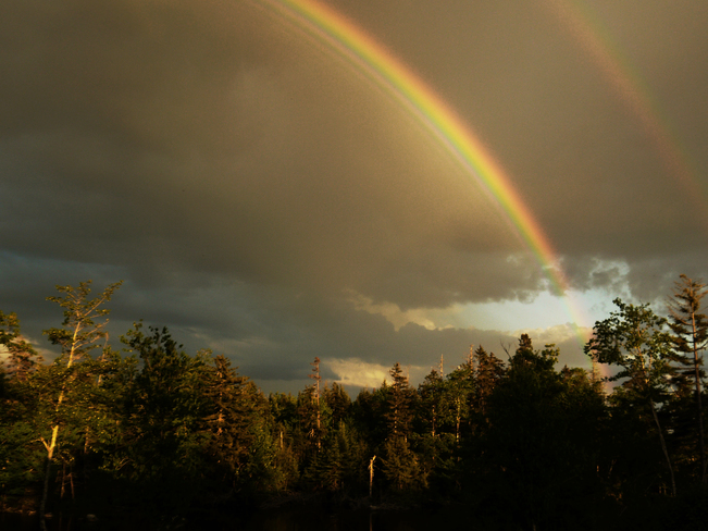 eagle viewing the stunning double rainbow Mineville, NS