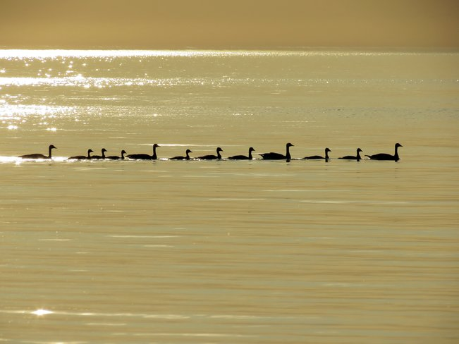 In a row! Bayfield, Bluewater, Ontario