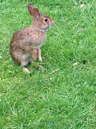 Cute Bunny London, Ontario Canada