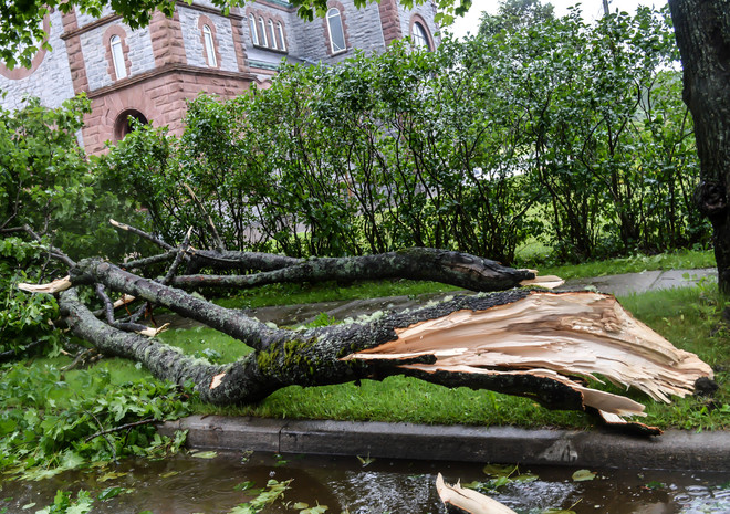 Large Tree Branch Down from winds from Tropical Storm Arthur in Saint John, NB Saint John, NB