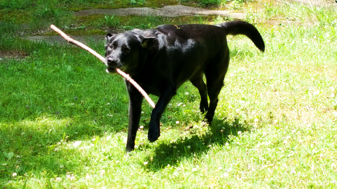 I Can Has Stick! Simcoe, ON