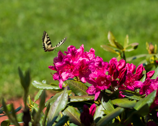 What a Flower ooooh Butterfly! Quispamsis, NB