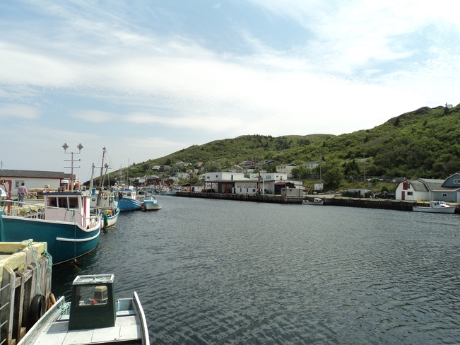 The waters of Petty Harbour, NL Petty Harbour-Maddox Cove, NL