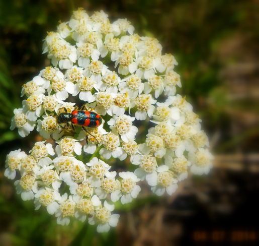 Beautiful Insects Sudbury, ON