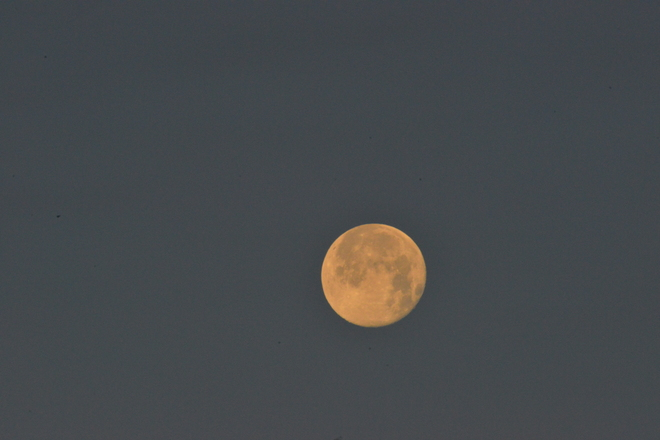 Full Moon About to Vanish in Morning Light Lethbridge, Alberta Canada