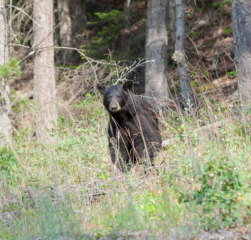 The first black bear of the season 834102-834308 4 Line East, Orangeville, ON L9W 2Y8, Canada