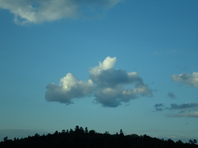 Imagination/Cloud looks like FLYING DOG E.L. Elliot Lake, Ontario Canada