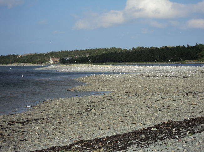 1. Scenic Carbonear Pond on a beautiful Day 2. Gulls on Spaniards Bay Beach Carbonear, NL
