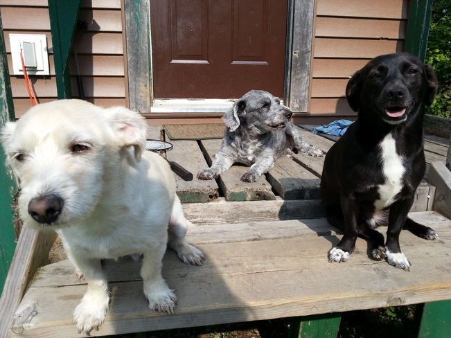 3 Hot Pups Glovertown, NL
