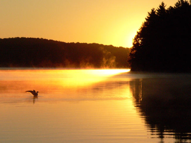 morning bliss Algonquin Provincial Park, Nipissing District, ON
