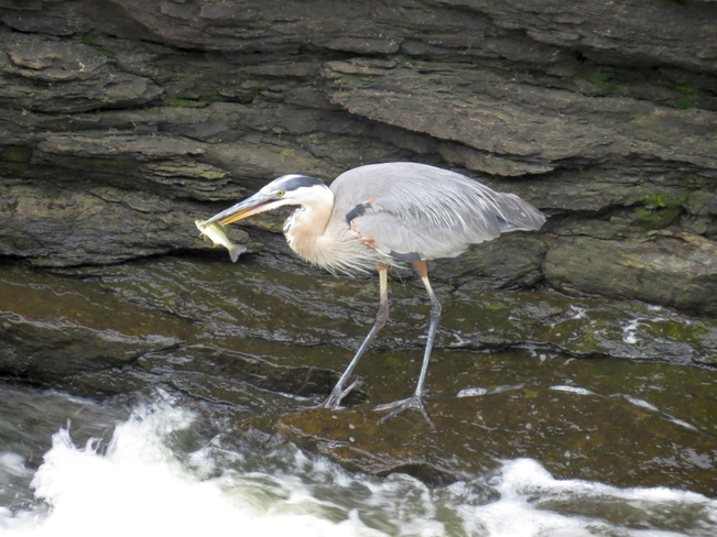 Heron Ottawa, ON