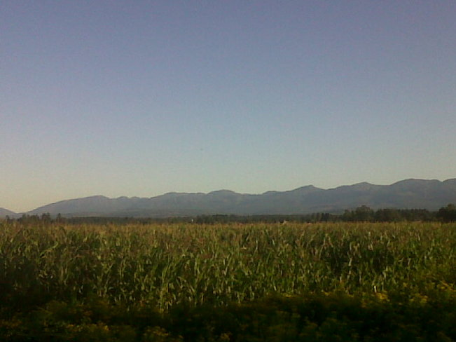 Lots of corn Comox Valley, British Columbia Canada