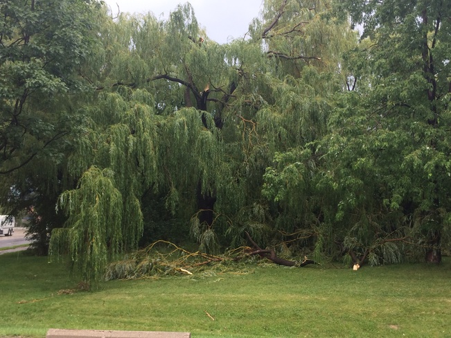 large tree branch fell Mimico, Ontario Canada