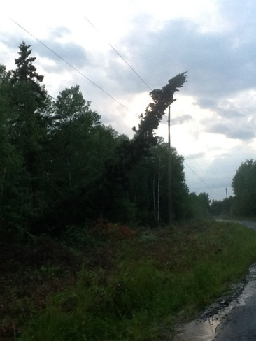 Tree fell on hydro line during storm 15000 Concession Road 10, Schomberg, ON L0G 1T0, Canada