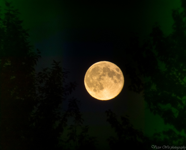 Super Duper Moon of August 10, 2014 in North Vancouver North Vancouver, BC