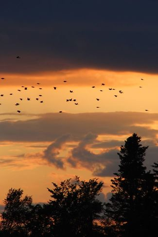 Birds at Dusk Lake Utopia, Saint George, NB