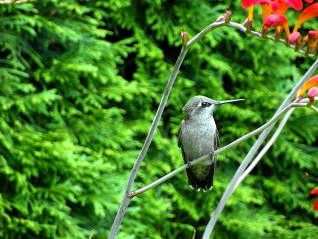 Humming Bird 1031 52nd Street, Edson, AB