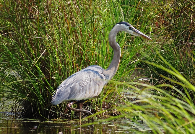 Fishing 101 by Mr. G. B. Heron Kate Pace Way, North Bay, ON P0H, Canada