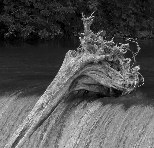 Driftwood at the Falls Paris, Brant, ON
