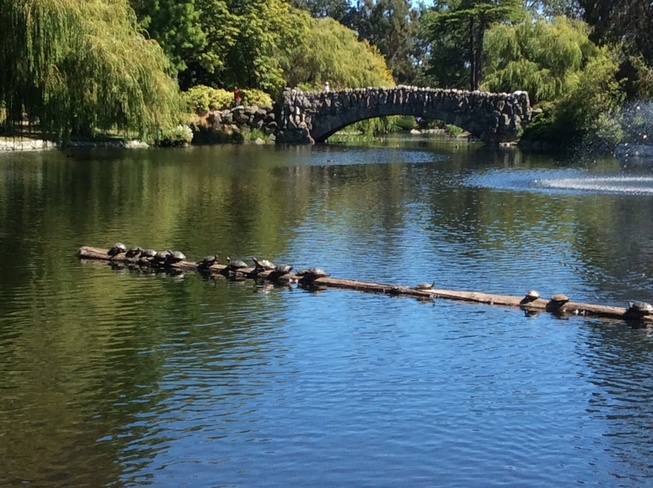 Turtles on a log. Victoria, British Columbia