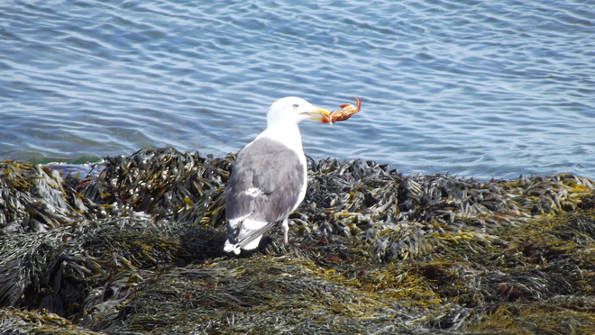 Lunch Time Burgeo, NL